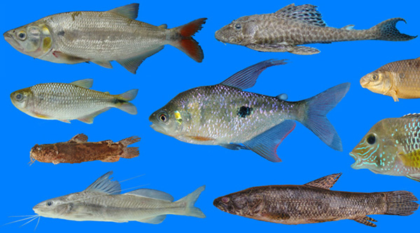 The Freshwater Fish Fauna of Western Ecuador
